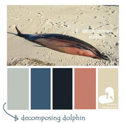 decomposing dolphin color palette
