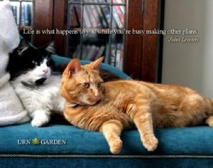 Life Happens Cats