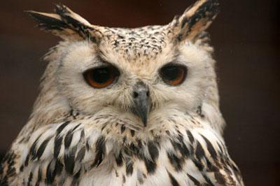 Perfect Small Memorial Owl Keepsake Urn Life In The Garden