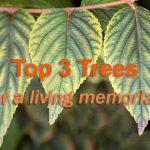 Urn Garden's Top 3 Picks for Living Memorials (Trees)