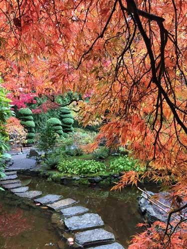 fall park scene