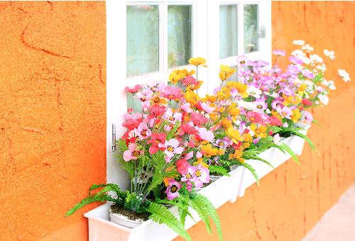 window box flowers