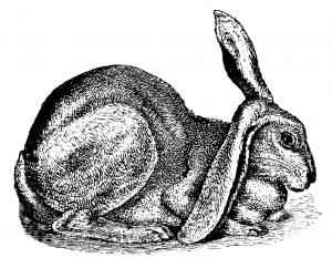 lop ear bunny sketch Charles Darwin