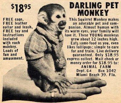 service monkey