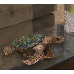 Turtle Cremation Urn